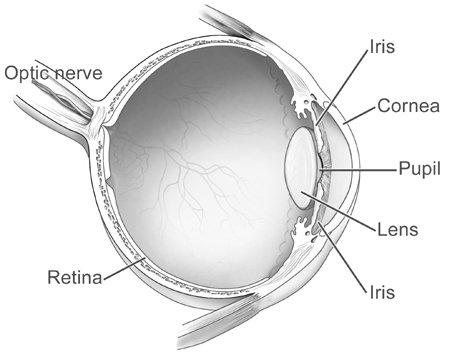 Diagram of human eye
